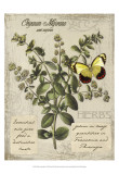 Herbs & Butterflies I Poster by Kate Ward Thacker