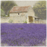 Tuscan Lavender Print by Bret Staehling