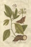 Vintage Foliage IV Giclee Print