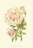Victorian Rose III Prints by P. Seguin-Bertault