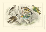 Goldfinch, Buntings &amp; Wrens Print by J. Stewart
