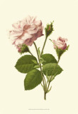Victorian Rose II Posters by R. Guillot