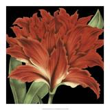 Dramatic Tropical Vision V Giclee Print