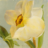 Daffodil Sky II Poster di Lanie Loreth