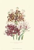 Lily Garden III Print by Jane W. Loudon