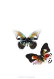 Butterflies Dance VI Posters