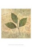 Antiqued Leaves I Prints by Linda Grayson
