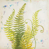 Nice Ferns II Posters by Patricia Quintero-Pinto