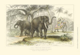 Asiatic Elephants Posters by J. Stewart