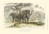 Asiatic Elephants Posters by Julius Stewart