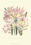 Lily Garden IV Prints by Jane Loudon