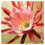 Desert Bloom I Prints by Jason Higby
