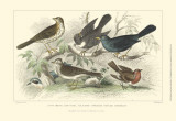 Skylark, Songthrush &amp; Redbreast Print by J. Stewart
