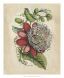 Tropical Beauty I Giclee Print by John Wiek