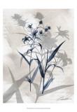 Indigo Bloom IV Plakater af John Butler