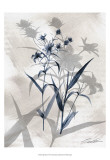 Indigo Bloom IV Prints by John Butler