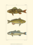 Freshwater Fish I Posters