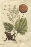Vintage Foliage III Giclee Print