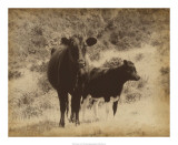 Lone Star Cows I Giclee Print by Jarman Fagalde