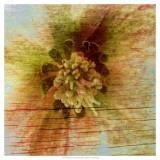Petrified Stem I Prints by Danielle Harrington