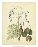 Catesby Bird & Botanical II Giclee Print by Mark Catesby