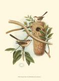 Titmouse & Nest Affiches