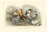 Roosters & Hens Posters by J. Stewart