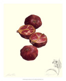 Pomegranate Posters by James Linton Sain