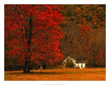 Farm House on a Autumn Morn' Giclee Print by Danny Head