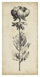 Singular Beauty III Giclee Print