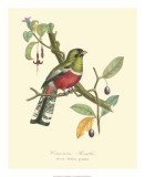 Nature Jardin I Giclee Print by L. Curmer