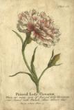 Vintage Carnation Giclee Print