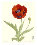 Poppy Prints by James Linton Sain
