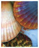 Shell Extraction IV Prints by Lola Henry