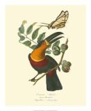 Nature Jardin III Giclee Print by L. Curmer