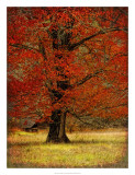 Autumn Oak II Giclee Print by Danny Head