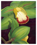 Lime Orchid II Posters by Jason Higby