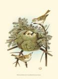 Prairie Warbler & Nest Posters