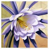 Desert Bloom II Print by Jason Higby