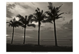 Palms at Night VI Poster by Tang Ling
