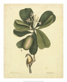 Catesby Bird & Botanical III Giclee Print by Mark Catesby