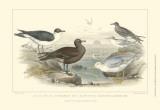 Gulls & Terns Affiches par J. Stewart