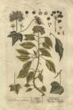 Vintage Foliage II Giclee Print