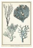 Oversize Coral Species II Art