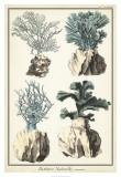 Oversize Coral Species III Giclee Print