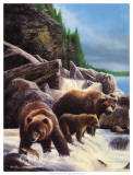 Grizzlies by Falls Prints by Kevin Daniel