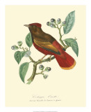 Nature Jardin II Giclee Print by L. Curmer