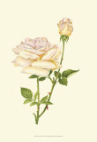 Victorian Rose IV Posters by P. Seguin-Bertault