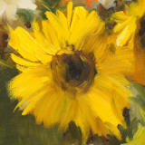 Sunflowers Square I Affiches par Lanie Loreth