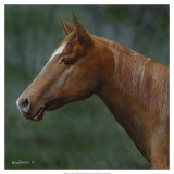 Quarter Horse Print by Kevin Daniel